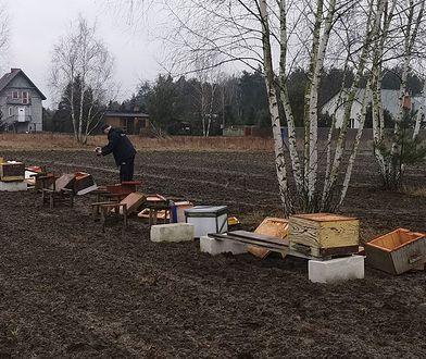Zginęło pół miliona pszczół. Zniszczona pasieka na Mazowszu