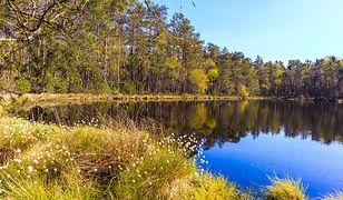 Z brzegu jezioro wygląda niepozornie, dopiero z lotu ptaka zapiera dech (zdjęcie ilustracyjne)