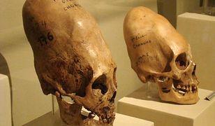 Czy wydłużone czaszki rzeczywiście mogły się znaleźć na biegunie południowym? Bloger to sprawdził