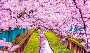 Początek wiosny – jak świętuje się go w innych krajach?