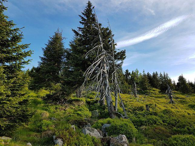 Widok na krajobraz Karkonoskiego Parku Narodowego
