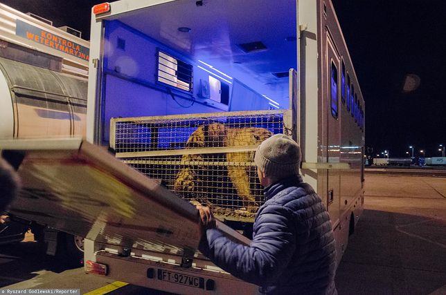 Tygrysy uwięzione na granicy. Kierowca ciężarówki nie kryje rozgoryczenia