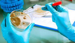 Bakteria może doprowadzić do śmierci w zaledwie kilka godzin