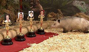 Ona zna zwycięzców Oscarów 2011?