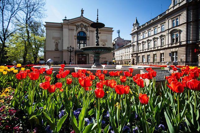 Bielsko-Biała. Już niedługo miasto zyska efektowną kwietną oprawę.
