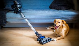 Mocne odkurzacze pionowe pomogą w pozbyciu się sierści z wykładzin i dywanów