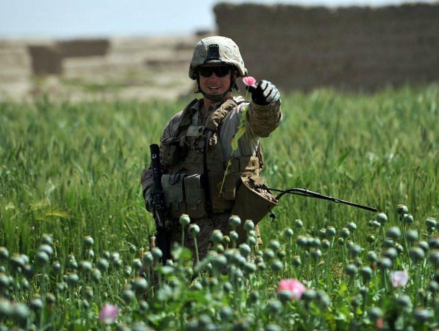 Narkotykowy boom w Afganistanie. Wielkość pól makowych i handel opium osiągają rekordowe rozmiary, a talibowie liczą zyski