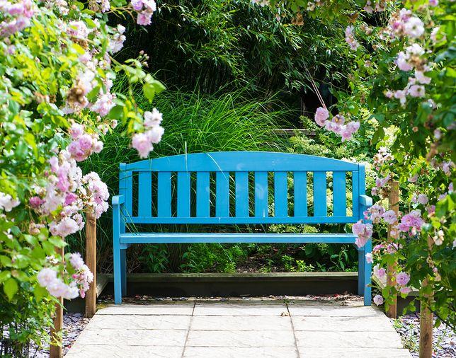 Ławka w ogrodzie to miejsce spotkań w cieniu drzew, długich rozmów i odpoczynku na łonie natury.