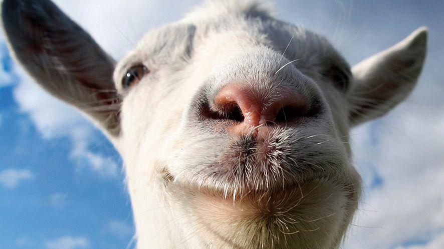 Goat Simulator — koza powiadasz?