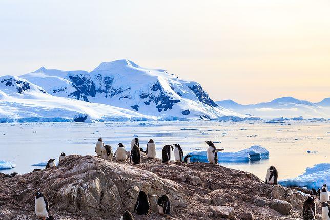 Pod lodową skorupą Antarktyki kryją się wulkany. Zaskakujące odkrycie naukowców