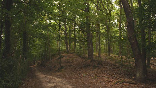 Dwugłowa żmija została zauważona w polskim lesie