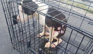 Illinois w USA. Nauczyciel uratował psa wyrzuconego do jeziora
