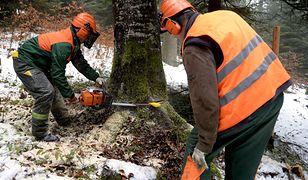 Tragiczna wycinka drzew w gminie Chojnice. Nie żyje 50-latek