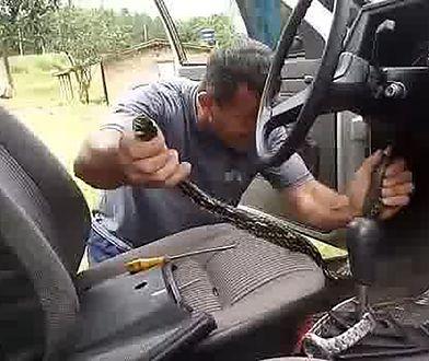 Wąż w samochodzie brazylijskiego kierowcy