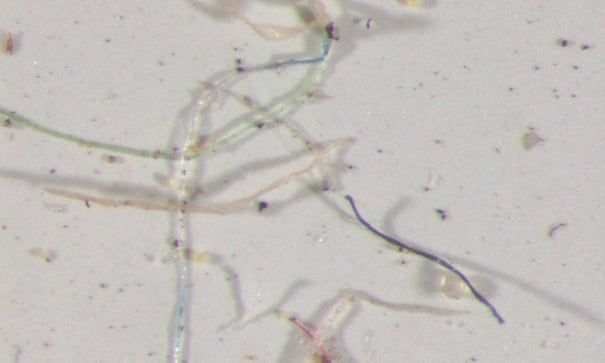 """""""Tęczowy"""" plastik pod mikroskopem"""
