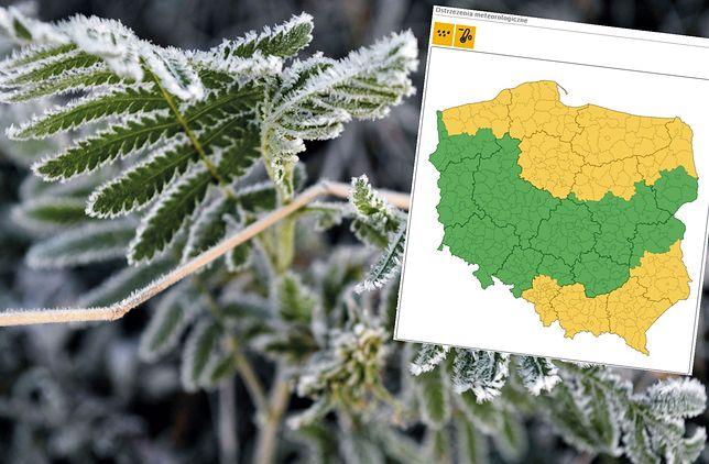 Pogoda. Zimni ogrodnicy. Alerty IMGW na północy i południu Polski