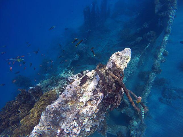 Antyczne statki na dnie morskim Albanii. Łakomy kąsek na czarnym rynku