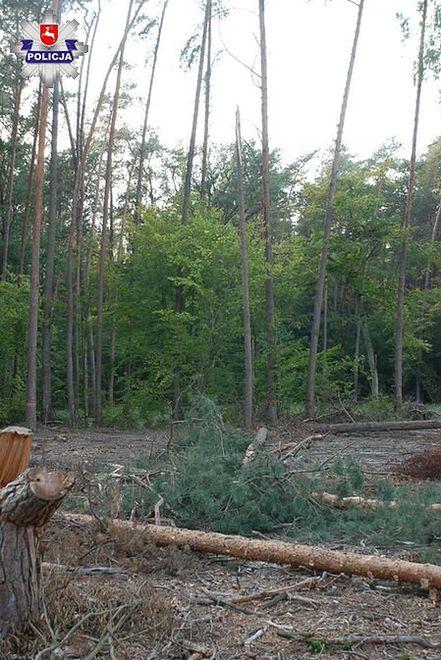 Na 29-latka spadło drzewo