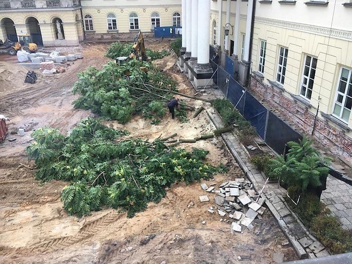 Wojewoda wyciął drzewa w centrum miasta bez zgody. Teraz musi zapłacić karę