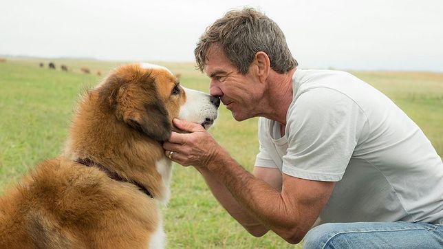 """""""Był sobie pies"""" był najpopularniejszą premierą ubiegłego weekendu"""