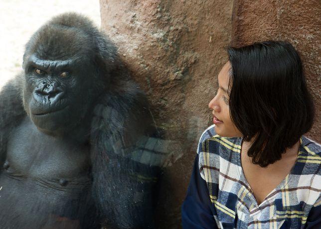 Ogrody zoologiczne – najgorsze zachowania turystów