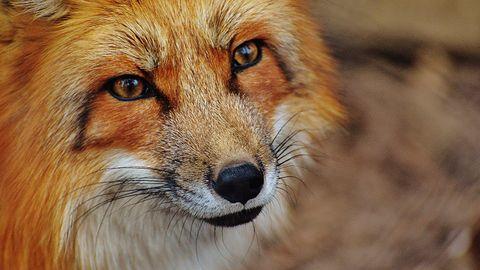 Firefox 63 jest szybszy na desktopie, dostał picture in picture na Androidzie