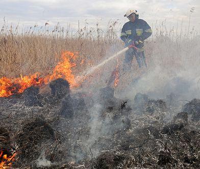Pożar w Biebrzańskim Parku Narodowym. Premier Mateusz Morawiecki: są dodatkowe środki dla strażaków