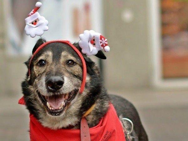 """Sukces świątecznej zbiórki w Schronisku Na Paluchu. """"Ponad 6 ton karmy"""""""