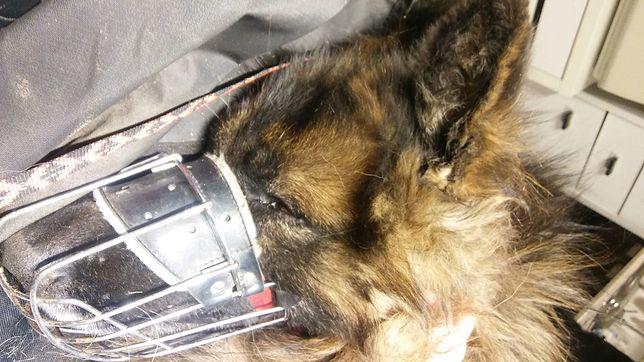 Ksiądz brutalnie skatował psa. Wieś biała się interwencji