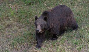 Armenia. Niedźwiedź zaatakował dwoje Polaków