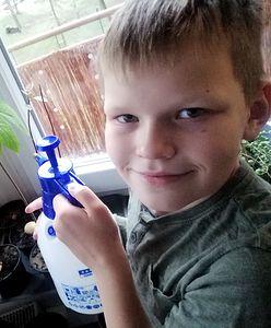 10-letni Julek sprzedaje sadzonki. W ten sposób zbiera na wyjazd do Japonii
