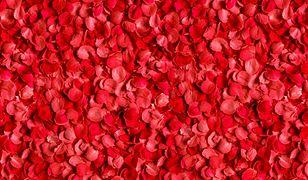Zarówno na Bliskim Wschodzie, jak i w Afryce Północnej, płatki róż są niezwykle cennym produktem żywnościowym.