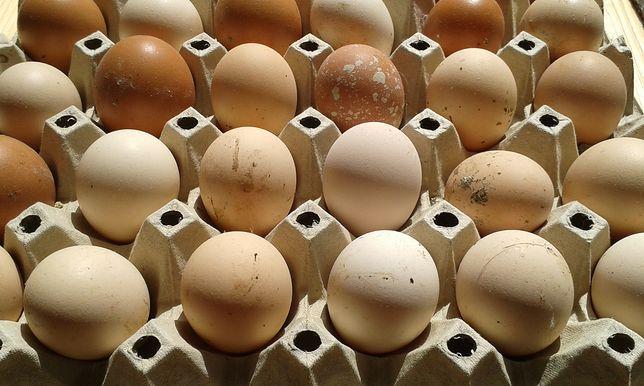 Popularna sieć sprzedaży stawia na jajka pochodzące od kur nie znających klatek.