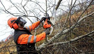 Lex Szyszko z nowymi stawkami. Ile zapłacimy za wycinkę drzew?