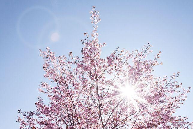 Pierwszy dzień wiosny. Kiedy wypada?