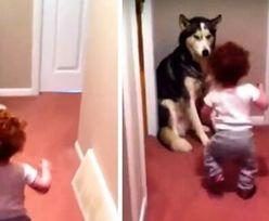 Pies został bohaterem dziewczynki. Wideo podbiło serca internautów