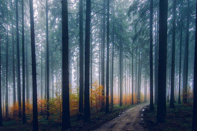 W Beskidach panują trudne warunki na szlakach.