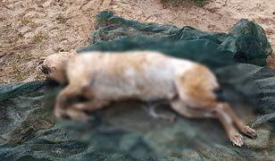 Bestialski atak w Płocku. Skatowany pies znaleziony w Wiśle