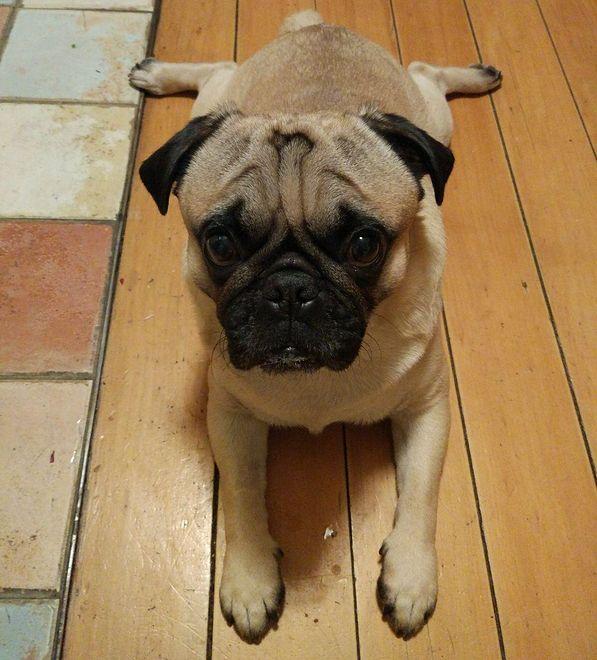 Komornik zajął psa i sprzedał go na eBayu. Skandal w Niemczech