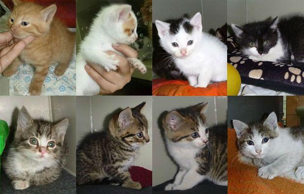 """KTOZ apeluje o adopcję kotów ze schroniska. """"Poszukujemy odpowiedzialnych opiekunów"""""""