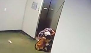 Wsiadła do windy, jej pies nie zdążył. Dramatyczne nagranie