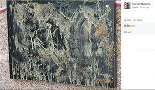 Nikt nie dba o tablice na miejscu katastrofy smoleńskiej? Oto relacja polskiego podróżnika
