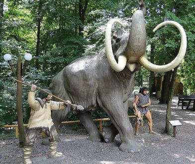 Park Dinozaurów w Nowinach Wielkich. Naukowcy znaleźli dowód, że właśnie tak polowano na mamuty