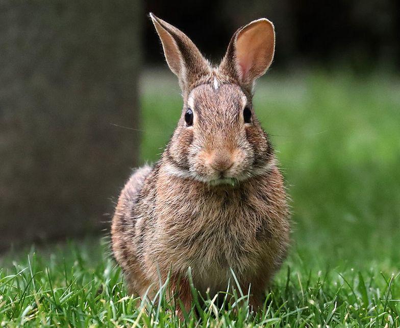 Wirus zabija dzikie i domowe zwierzęta w USA