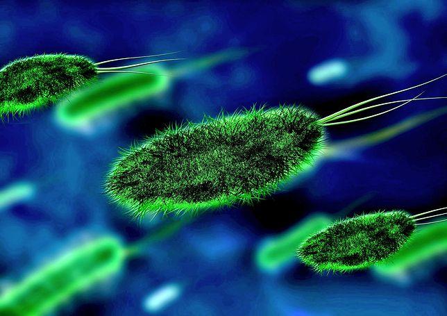Skąd się wzięły takie oporne bakterie? Z nieprawidłowego stosowania i nadużywania antybiotyków