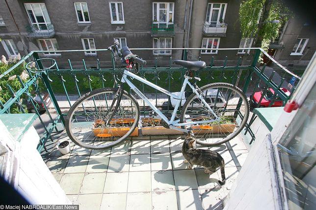"""Ich sąsiadka ma około 20 kotów. """"Smród wchodzi drzwiami i oknami"""""""