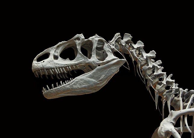 Dlaczego wyginęły dinozaury? Pojawiły się nowe dowody