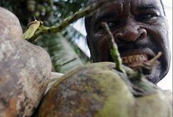 Obiera kokosy zębami!