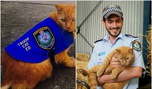 Ed - kot, który służy... w policji