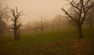 Chmura pyłu znad Sahary dotarła do USA [zdj. ilustr.]